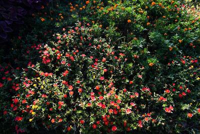 各类花卉草坪