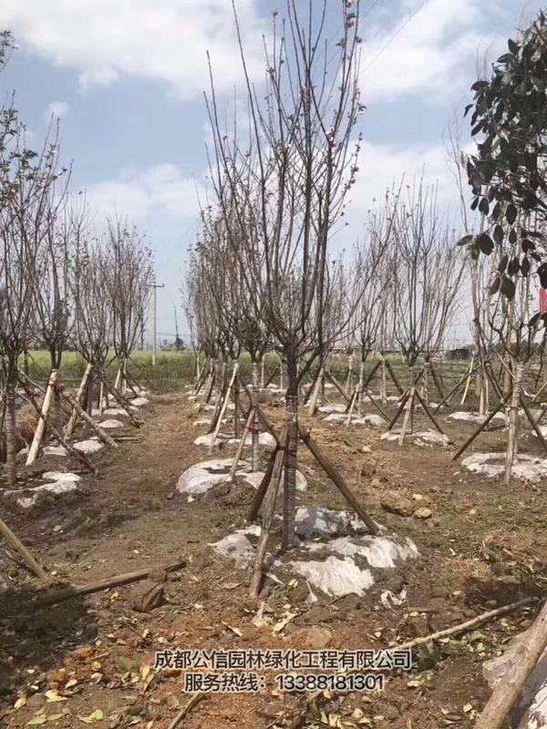 云南苗圃基地