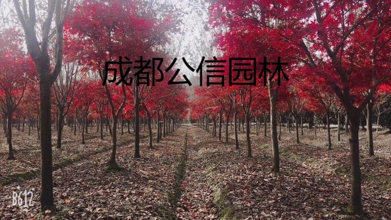 微信圖片_20190125125239.jpg