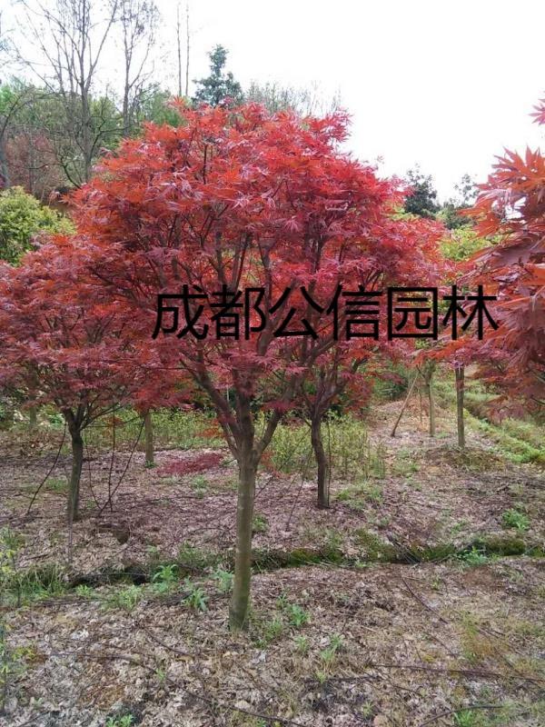 微信圖片_20190125125247.jpg