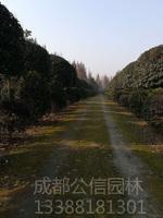 四川花木苗圃基地